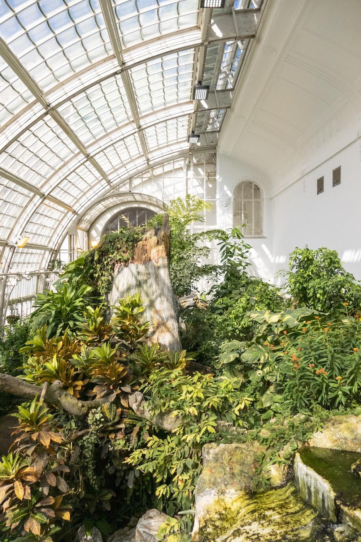 green plants inside white building