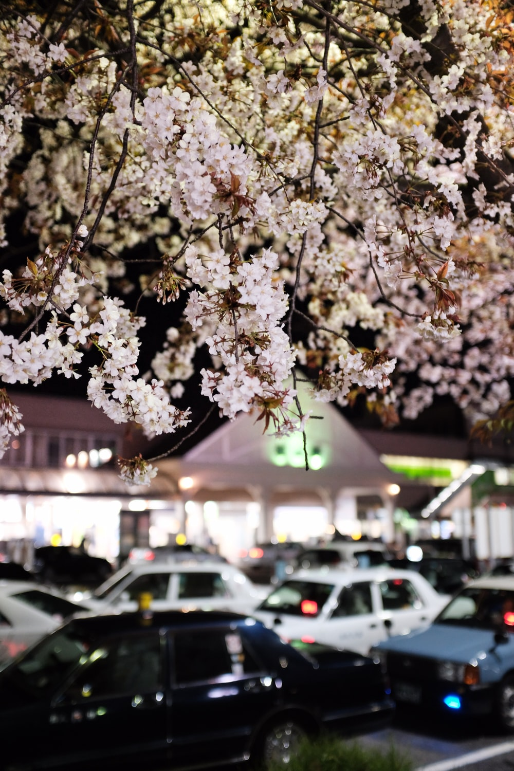 white cherry blossom tree during night time
