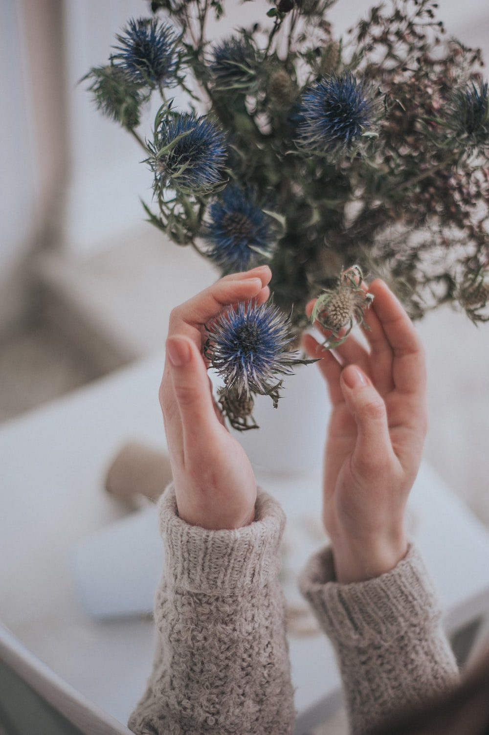 person holding green and blue plant