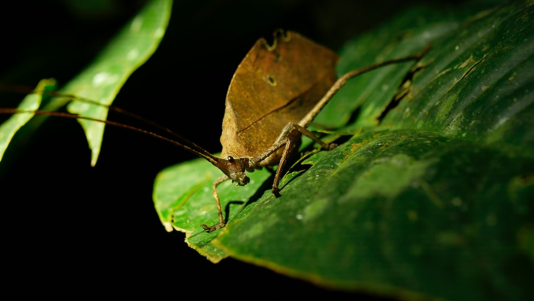 Insect in the Amazon rainforest Peru, sitting on a leaf at night