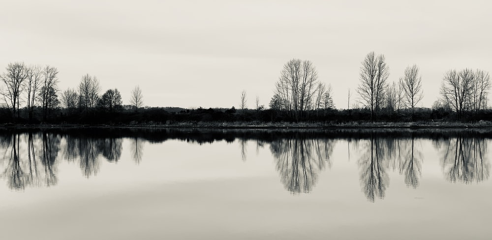 bare trees near body of water during daytime