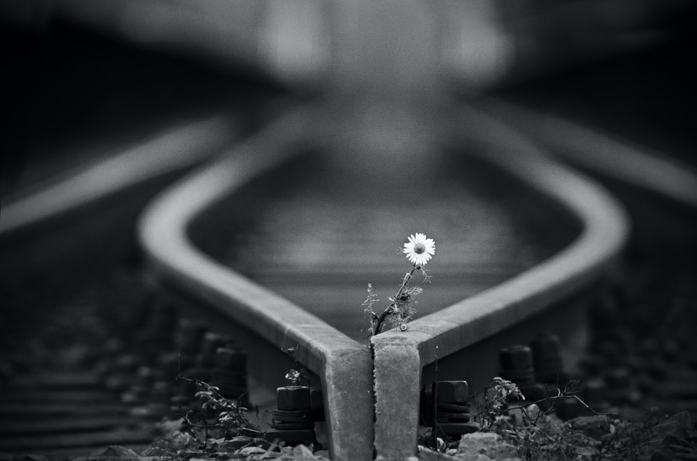grayscale photo of a flower on a table