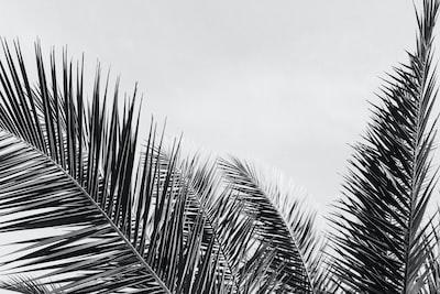 Palm leaves by Nika Akin