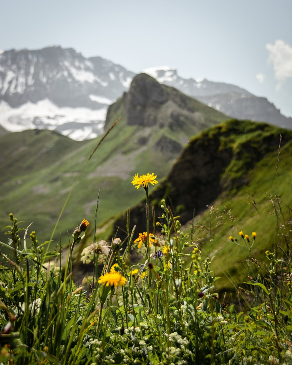 yellow flowers on green grass field near mountain during daytime