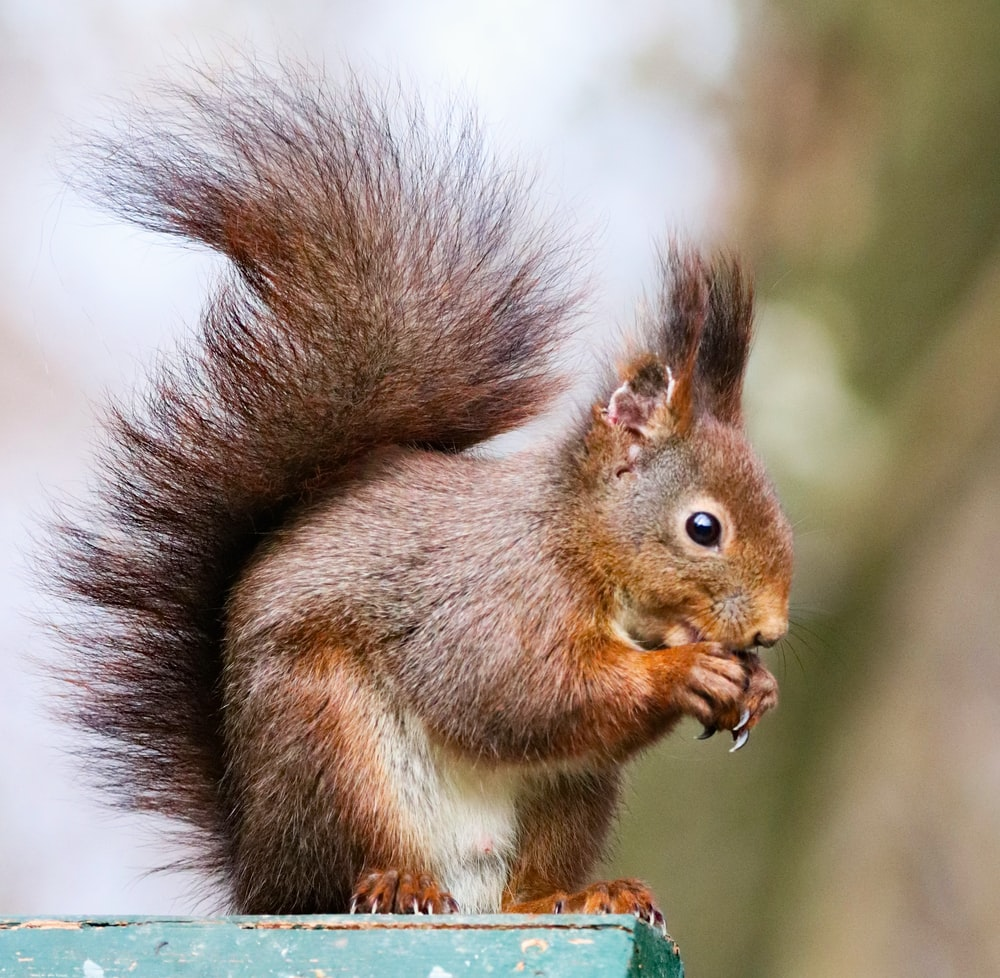 brown squirrel on green and brown tree branch