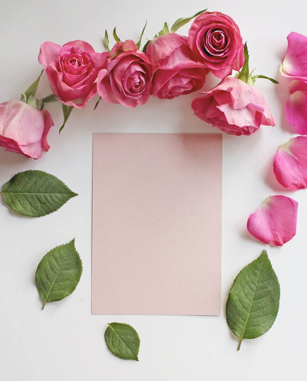 pink roses beside white paper