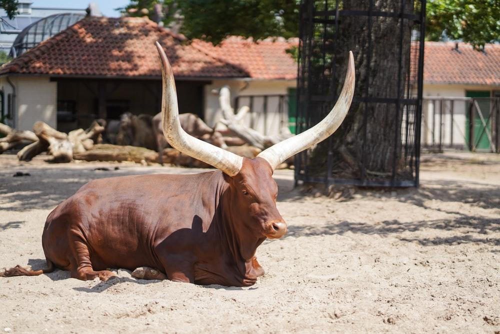 brown cow on white sand during daytime