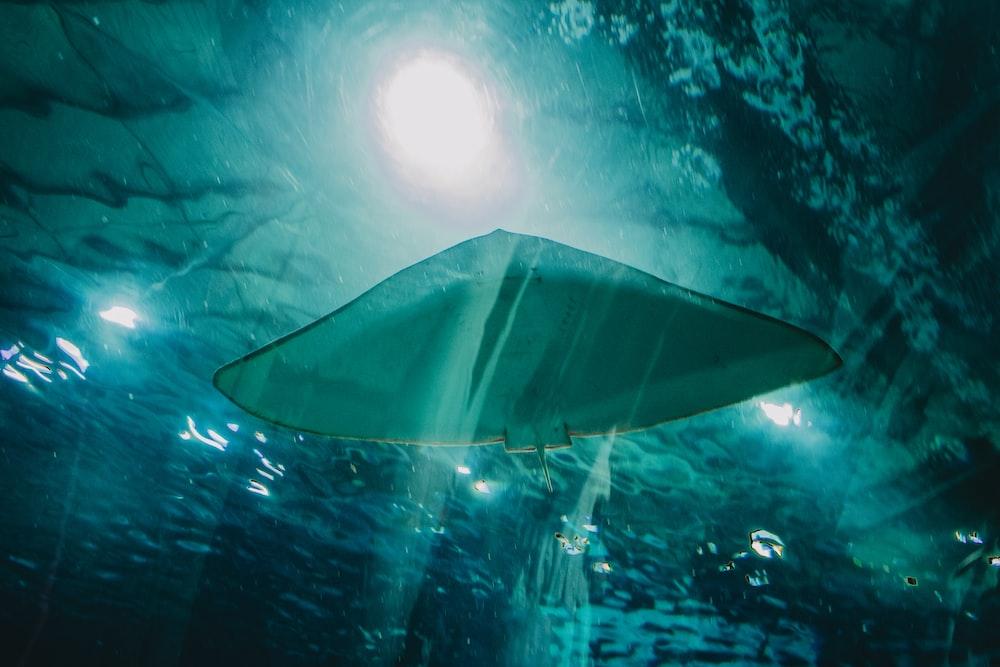 black umbrella under water during daytime