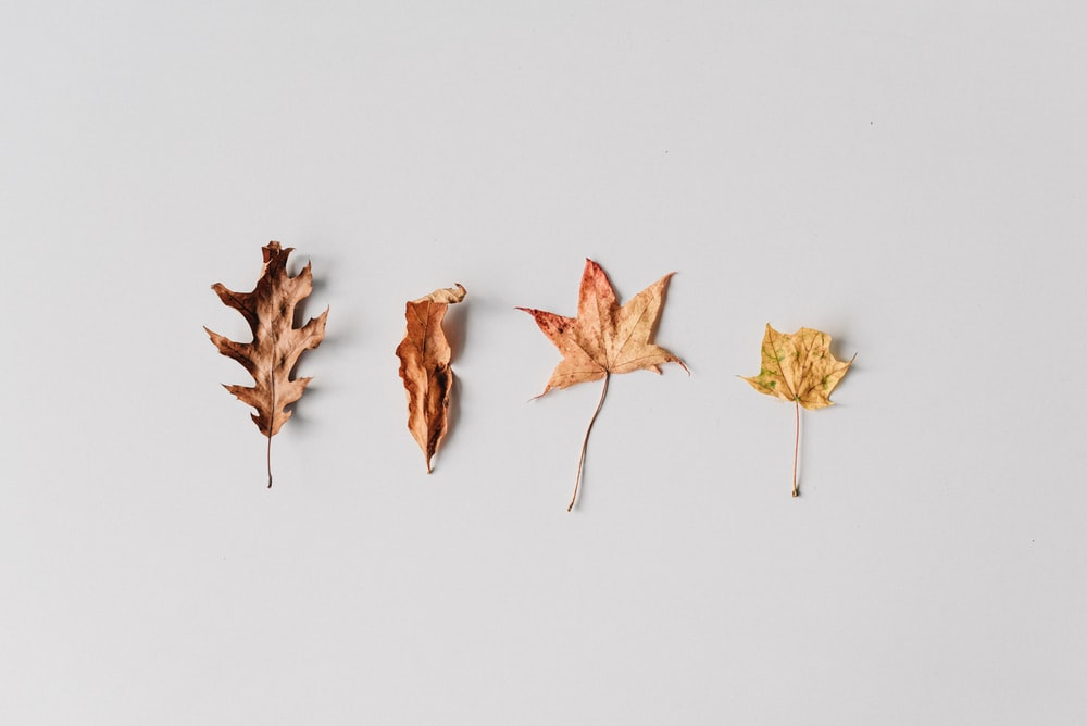 brown leaves on white surface