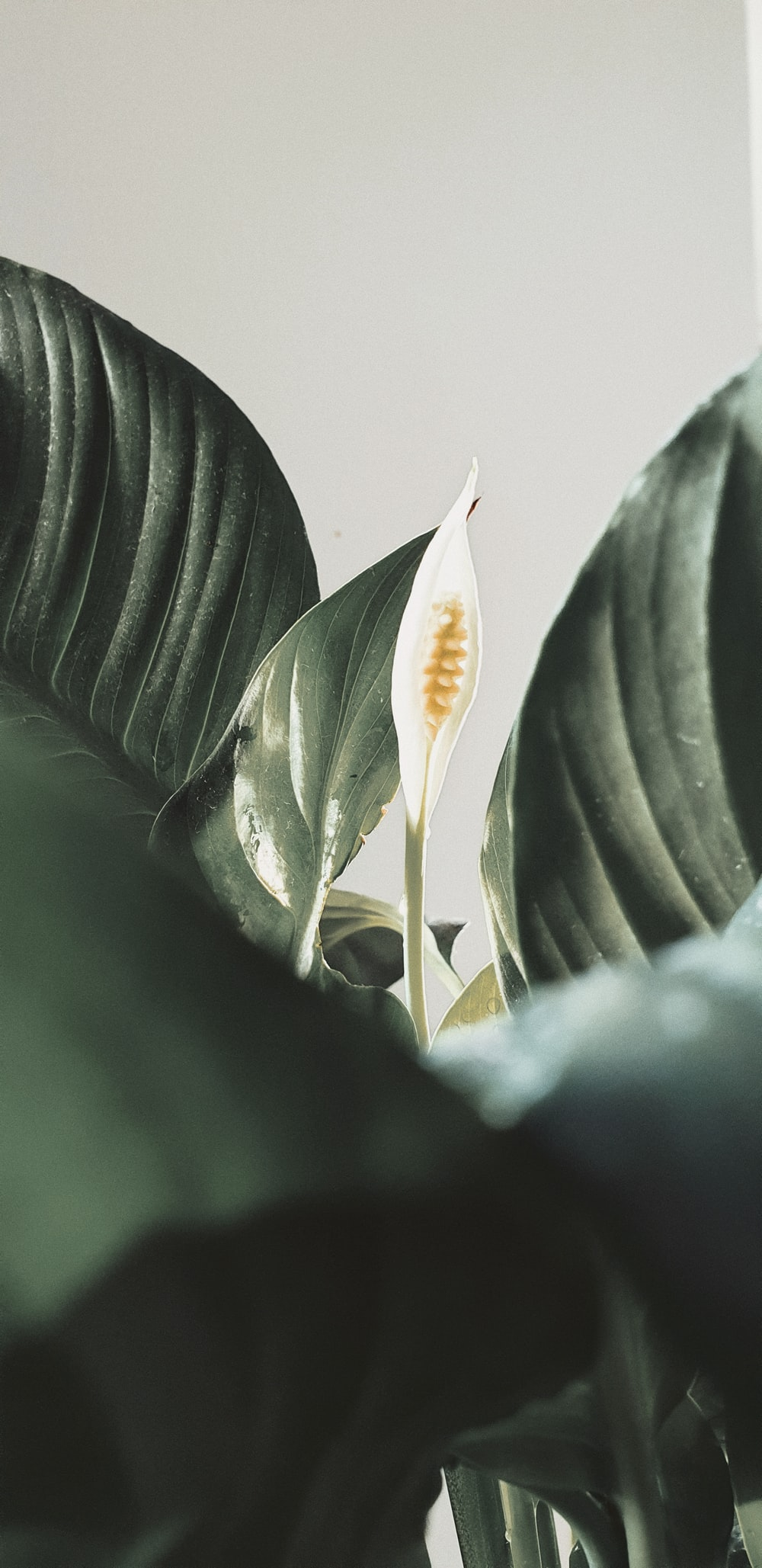 white flower bud in close up photography