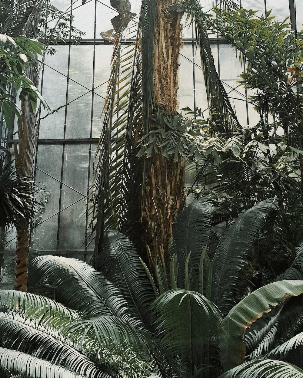 green palm plant inside greenhouse