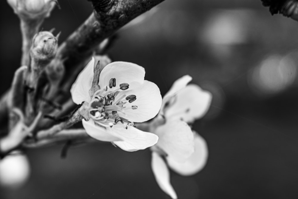 white flower in gray scale