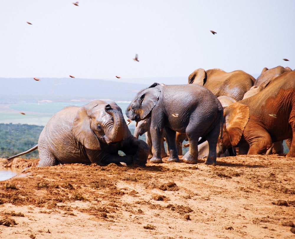 group of elephant on brown sand during daytime