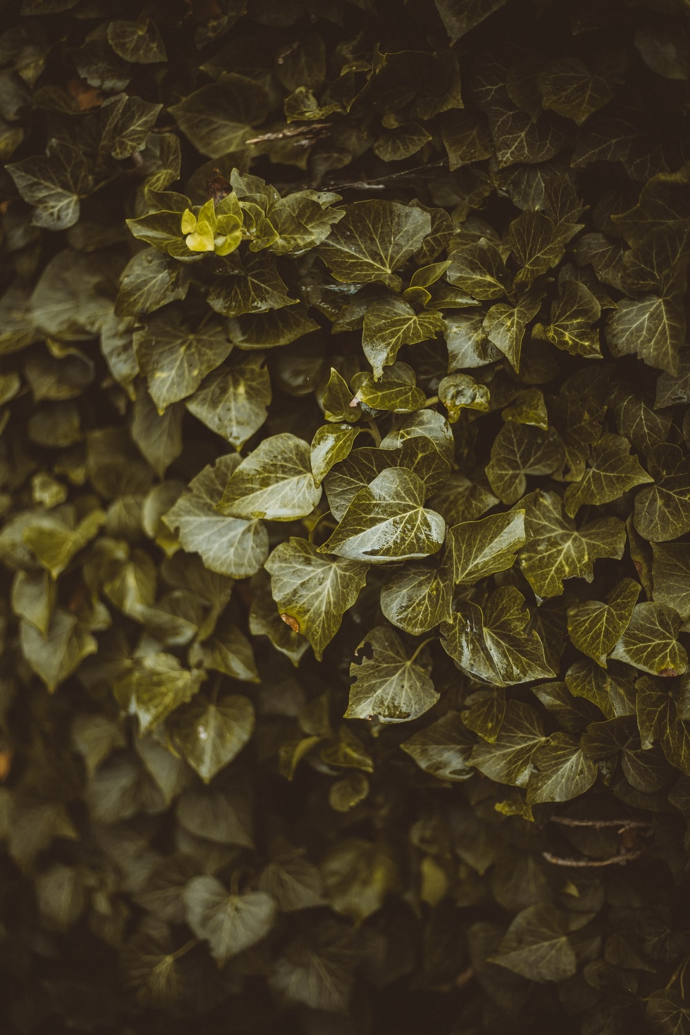yellow and green leaves in close up photography
