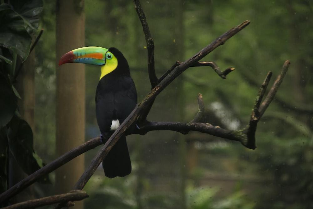 black yellow and green bird on tree branch