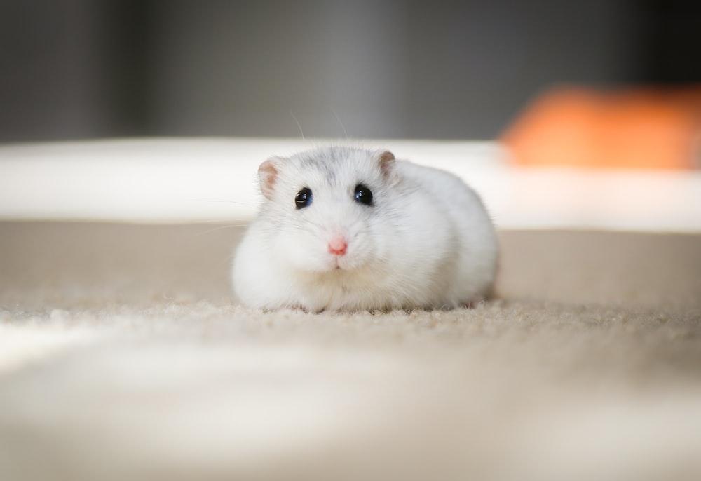white mouse on white textile