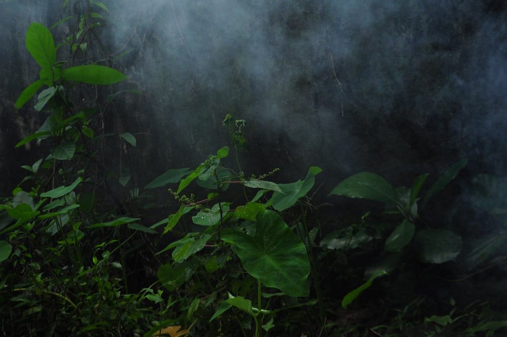 green leaves plant with white smoke