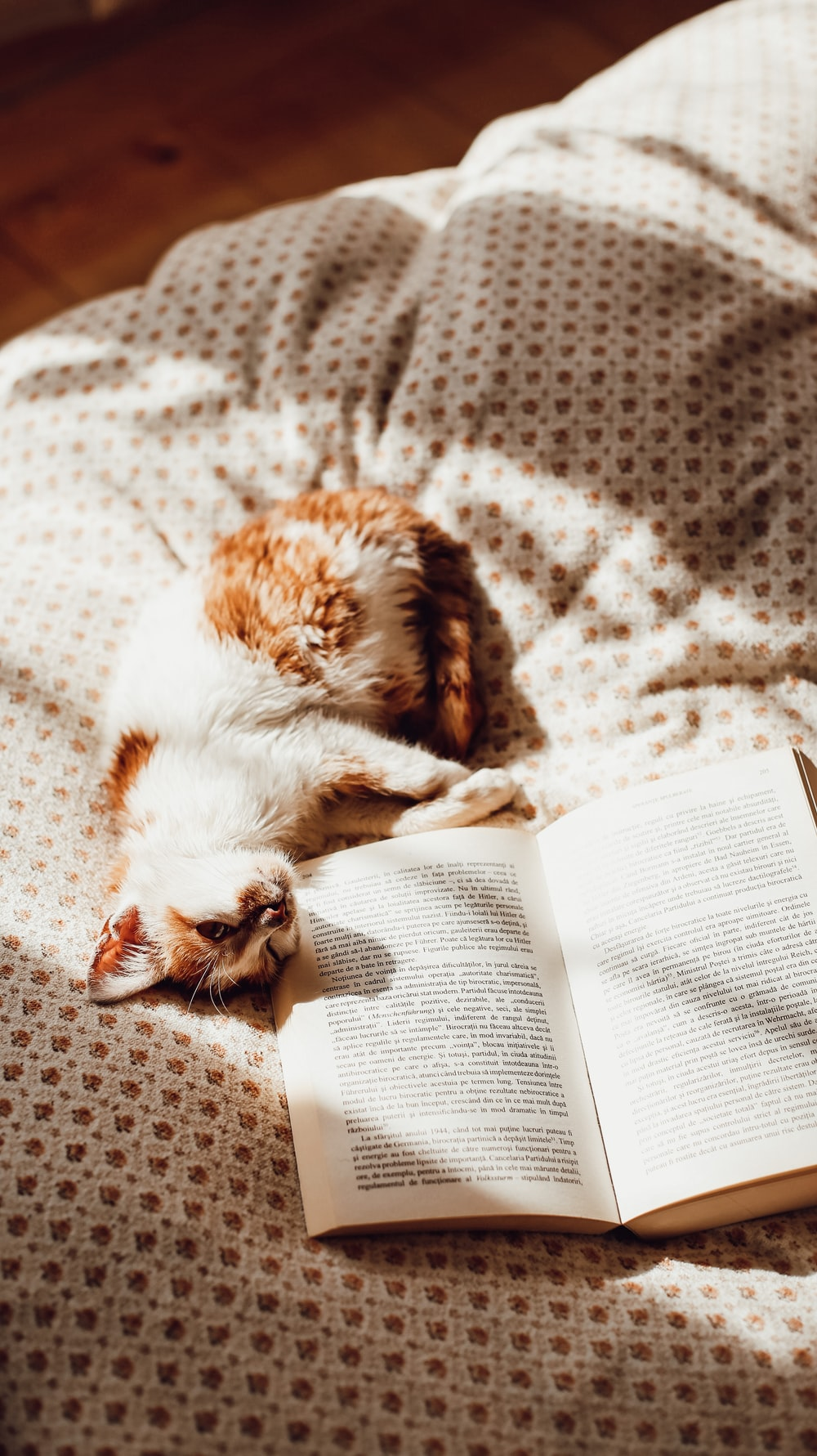 brown and white cat lying on white book page