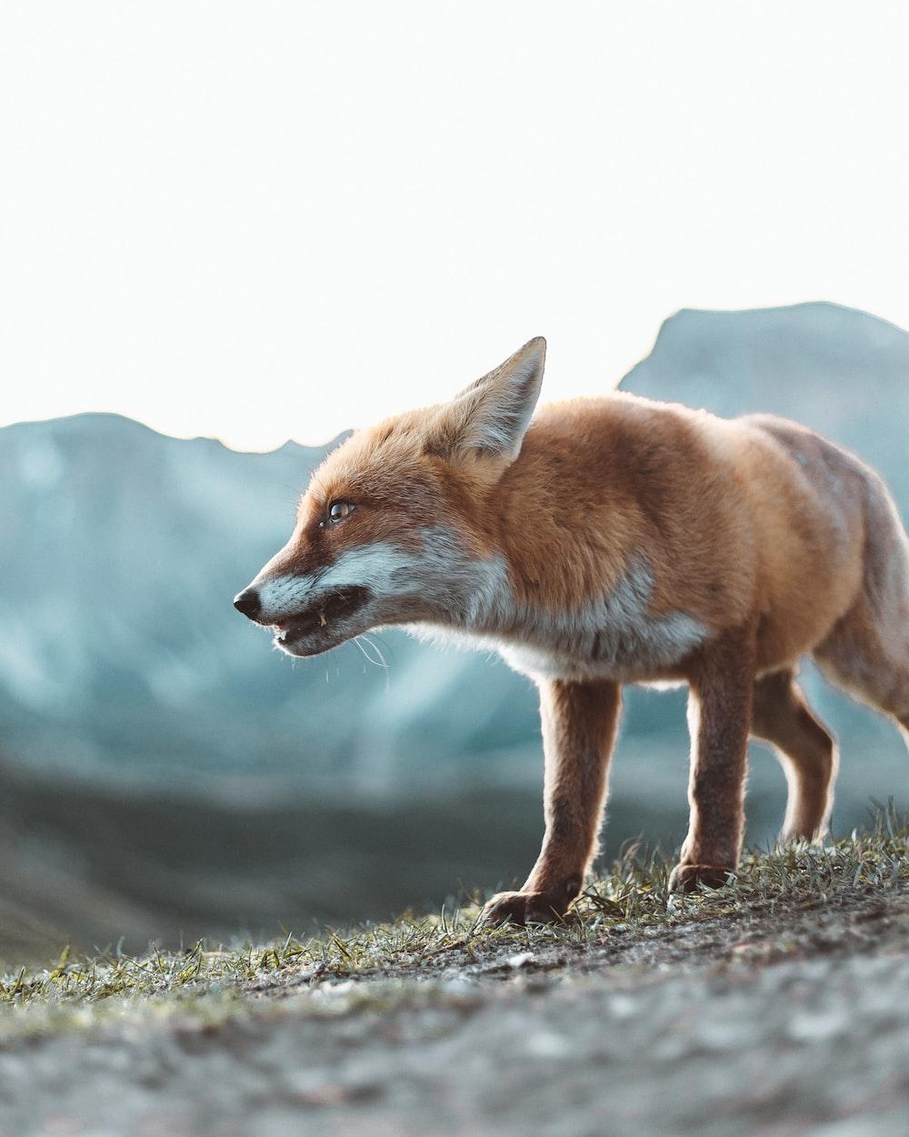 brown fox on gray ground during daytime