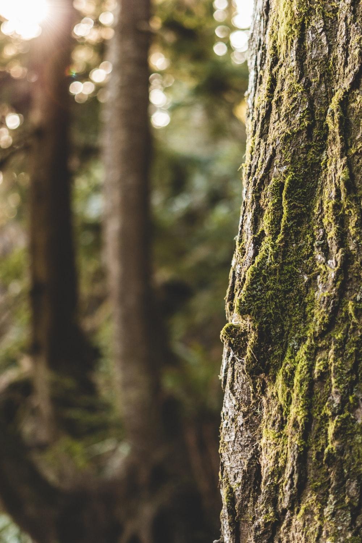 brown tree trunk in tilt shift lens