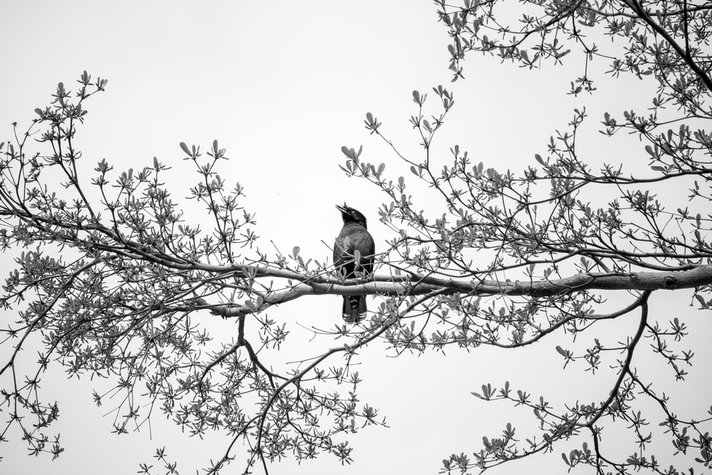 black bird on tree branch