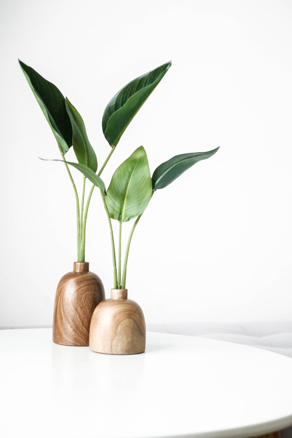 green plant on brown wooden vase