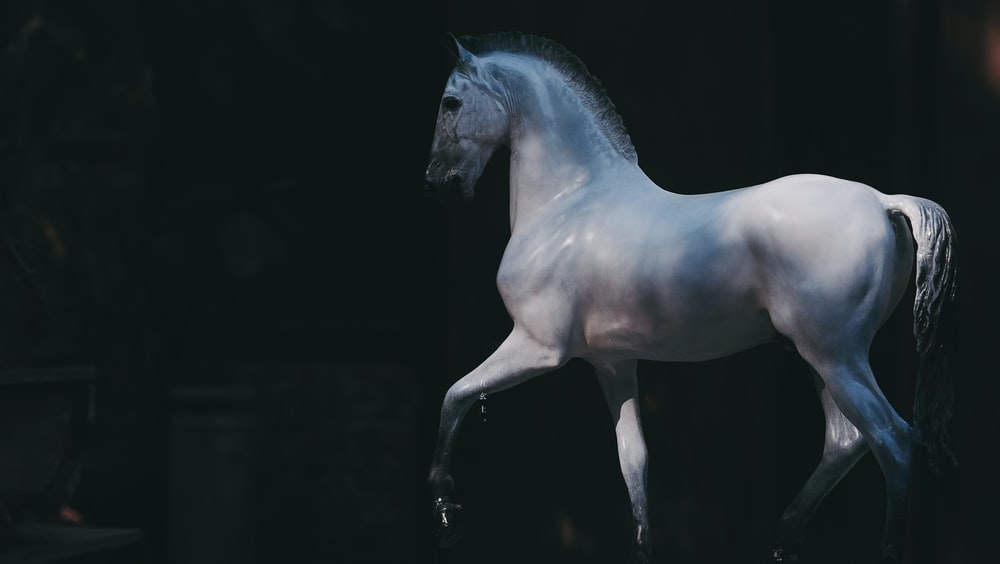 white horse with black background