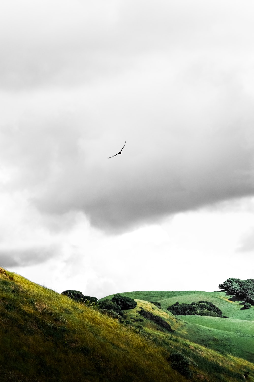bird flying over green grass field under cloudy sky during daytime