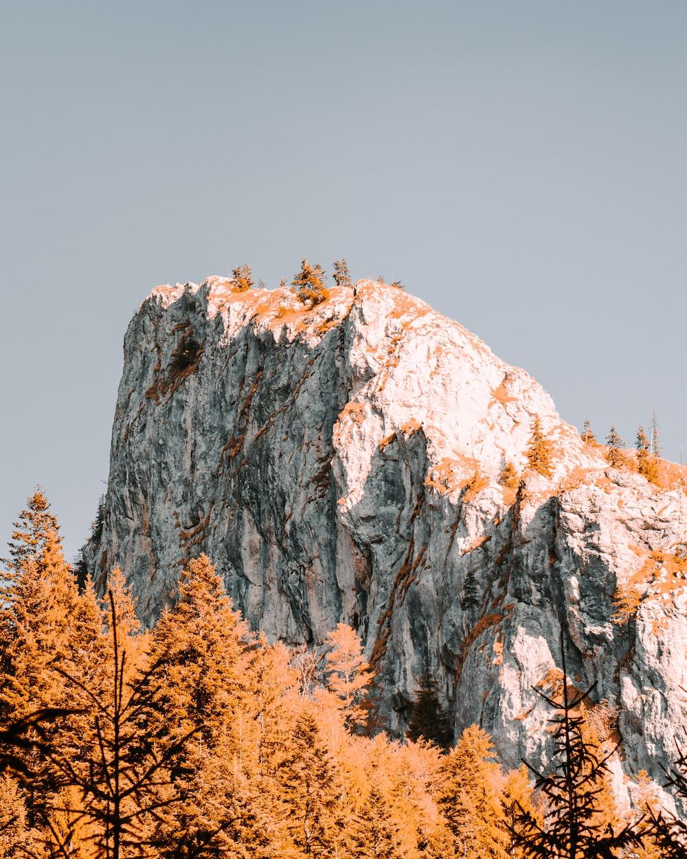 brown trees near mountain during daytime