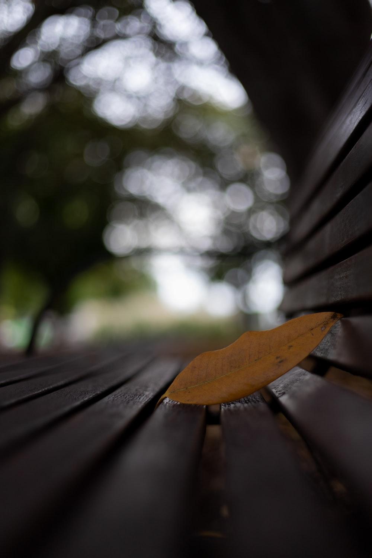brown leaf on brown wooden bench