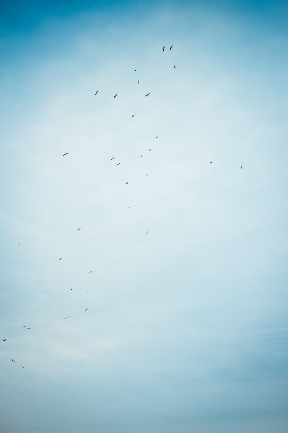 flock of birds flying under white clouds during daytime