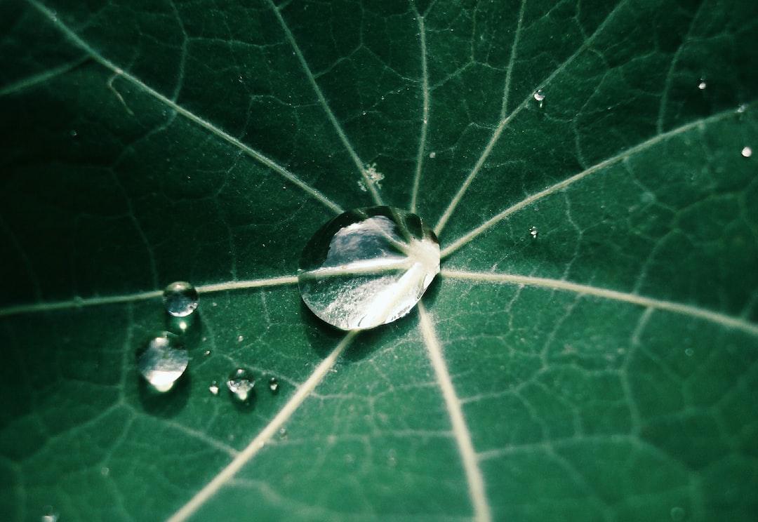 .. awakening of nature 🌿💦...