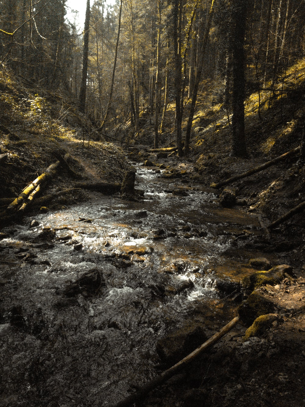river in the middle of forest