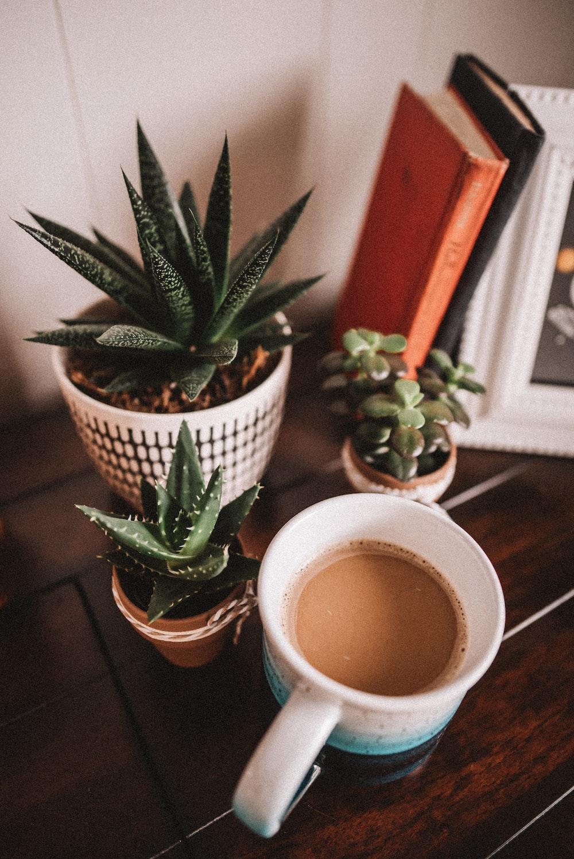 green cactus plant on white ceramic mug
