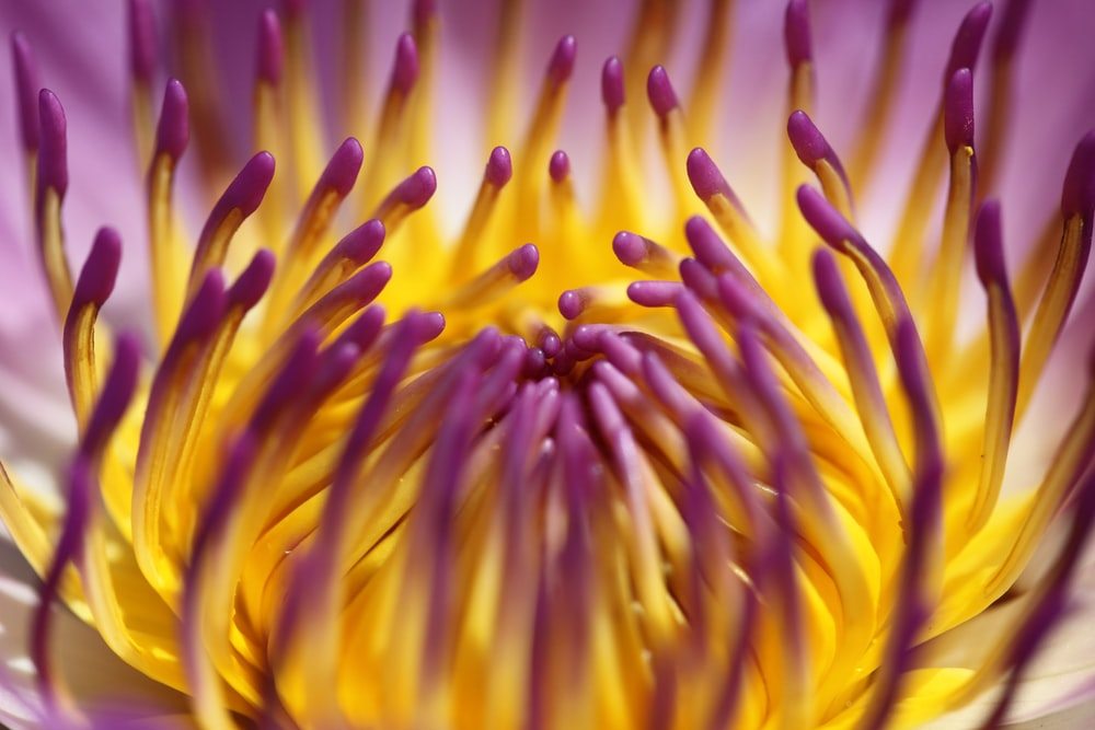 yellow and purple flower in macro photography