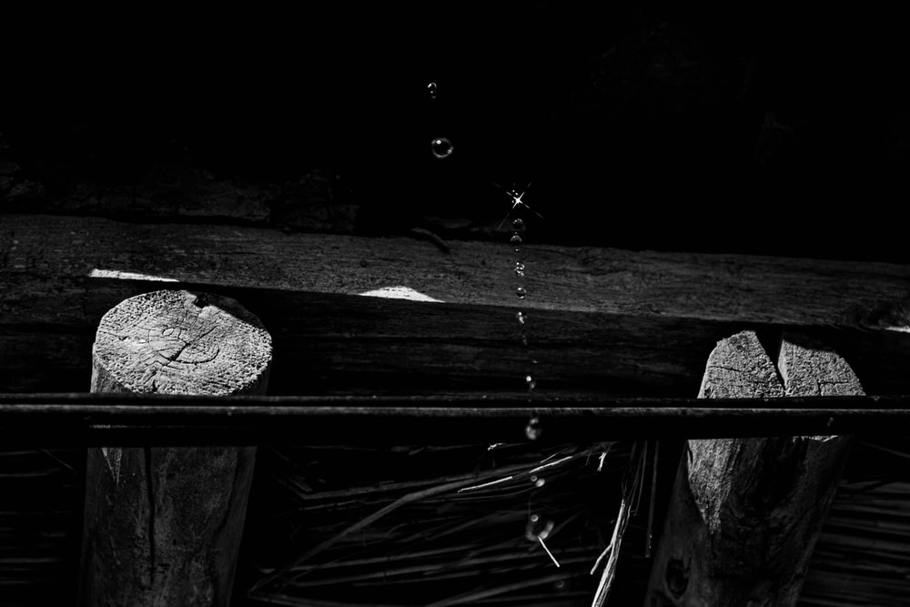 grayscale photo of wood log