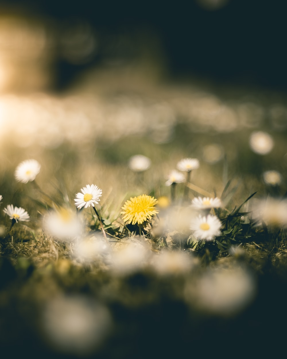 white and yellow flowers on green grass