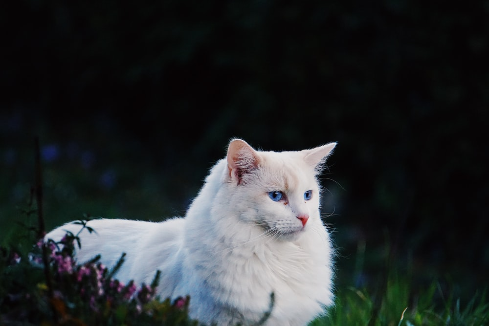 white cat on green grass during daytime