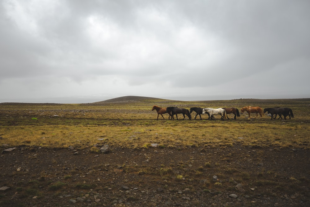 herd of horses on brown grass field under white clouds during daytime