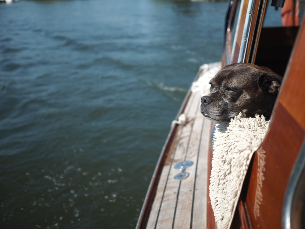 brown short coated dog on brown wooden dock during daytime