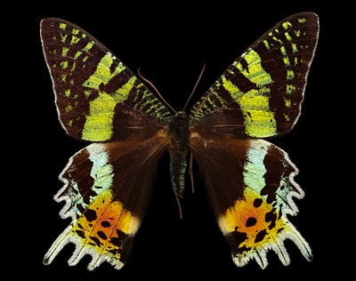 brown black and white butterfly