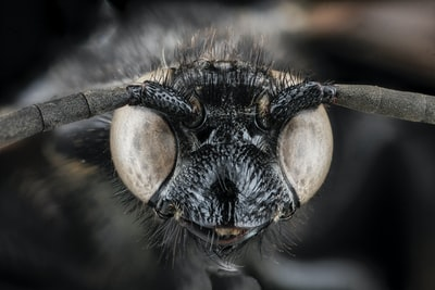 macro photography of black and brown insect