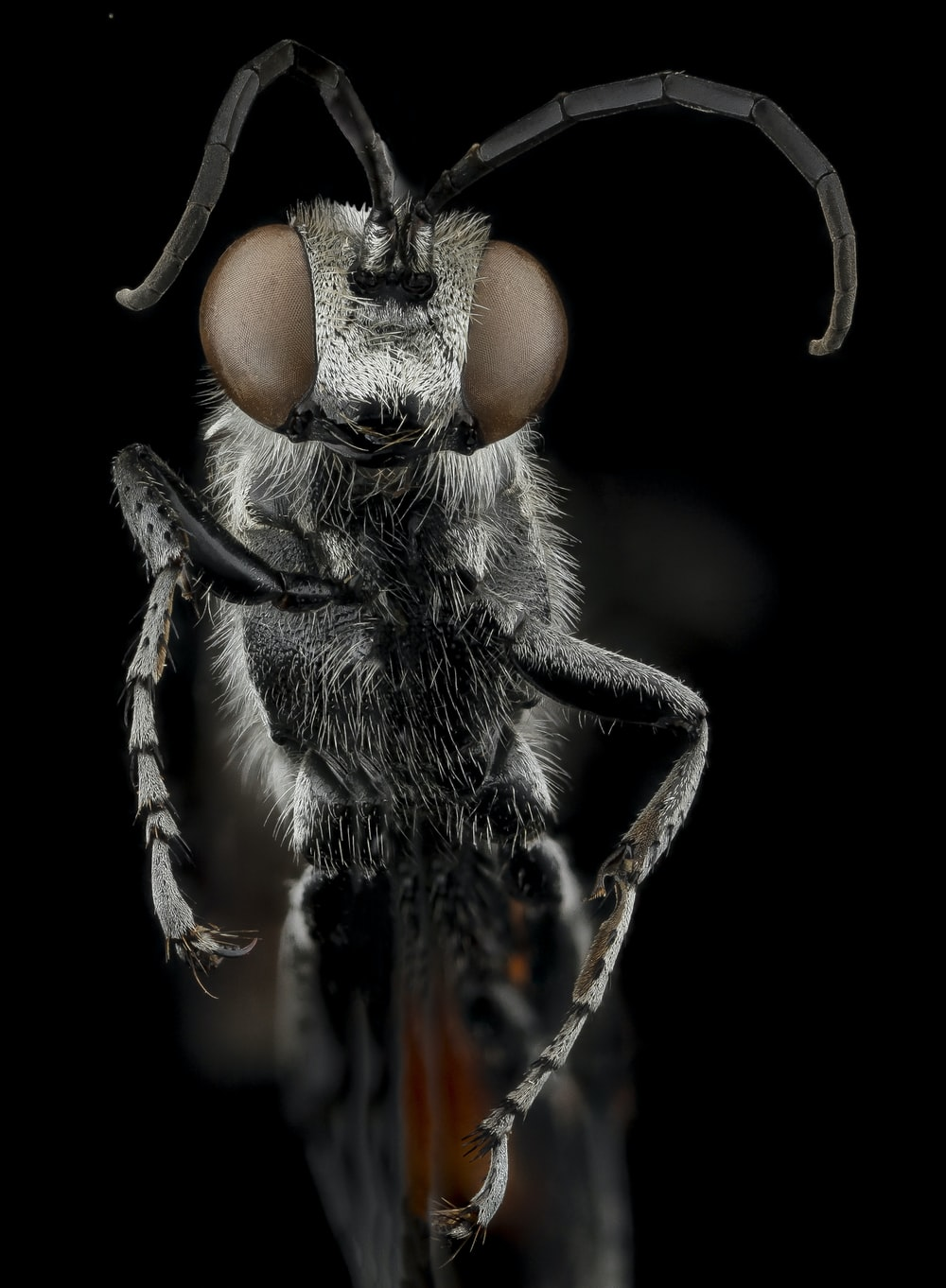 black and brown fly in close up photography