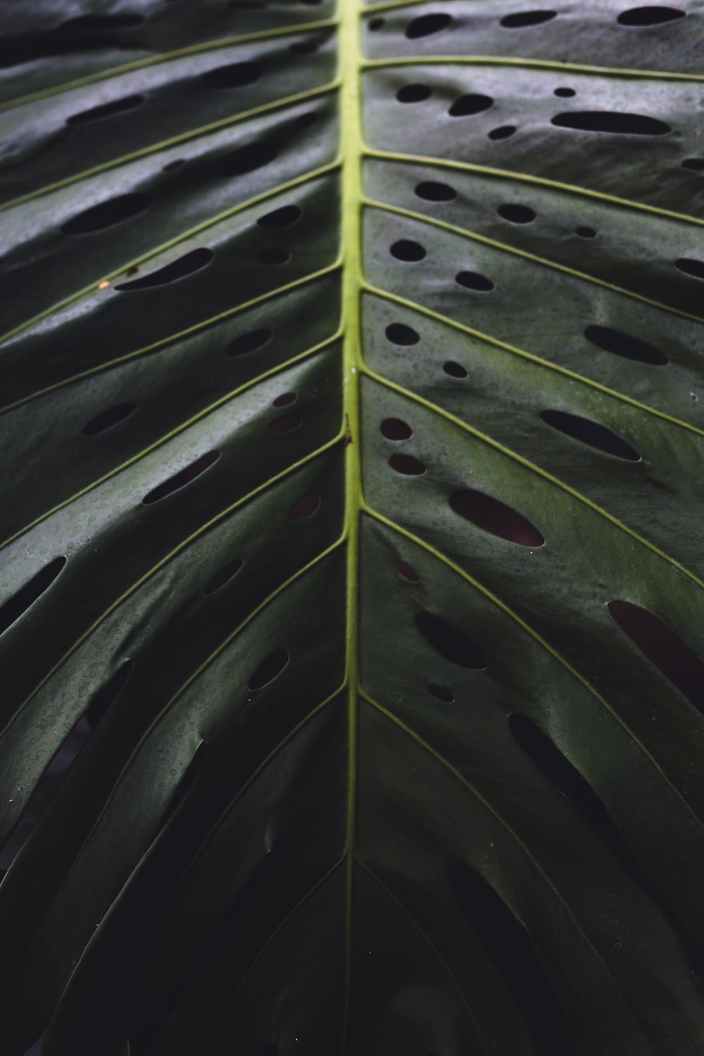 green and yellow plant leaves
