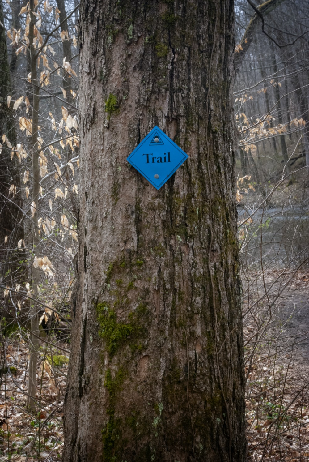 blue and white arrow sign on brown tree