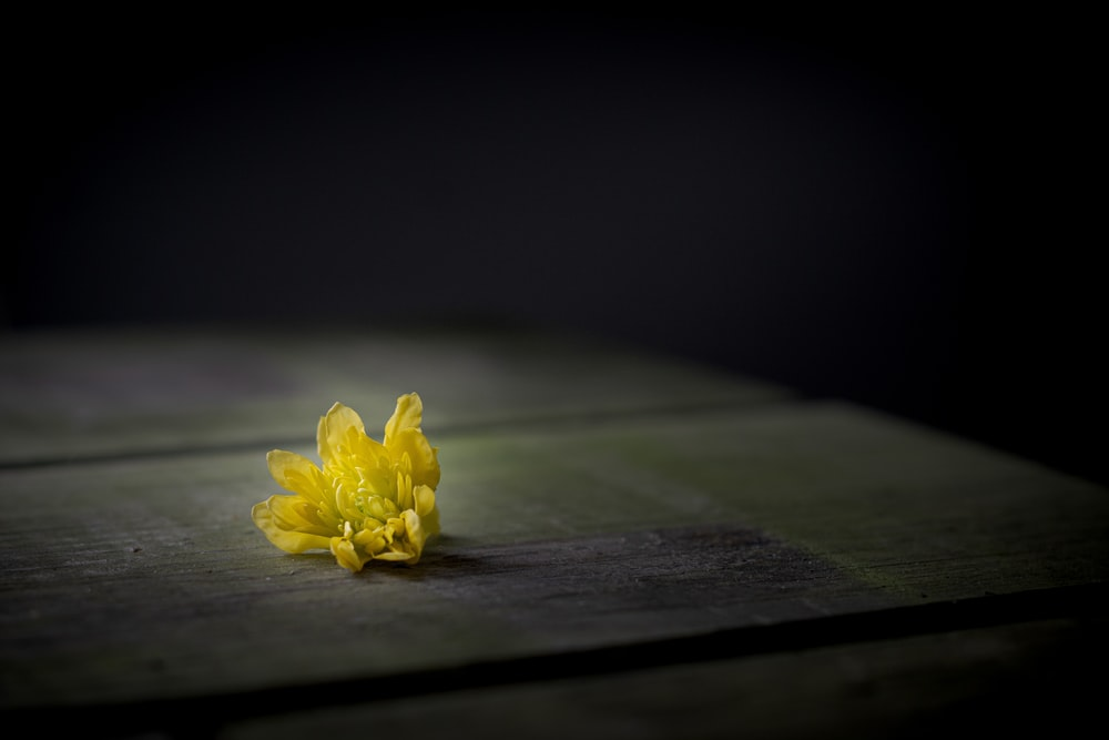 yellow flower on brown wooden table