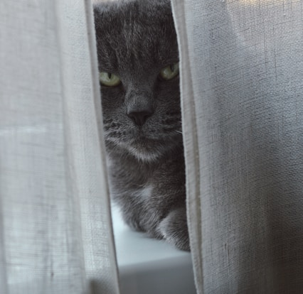 grey and white cat on window