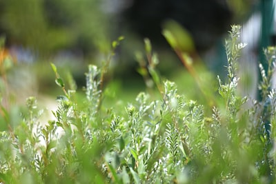 green grass in close up photography mongolia teams background
