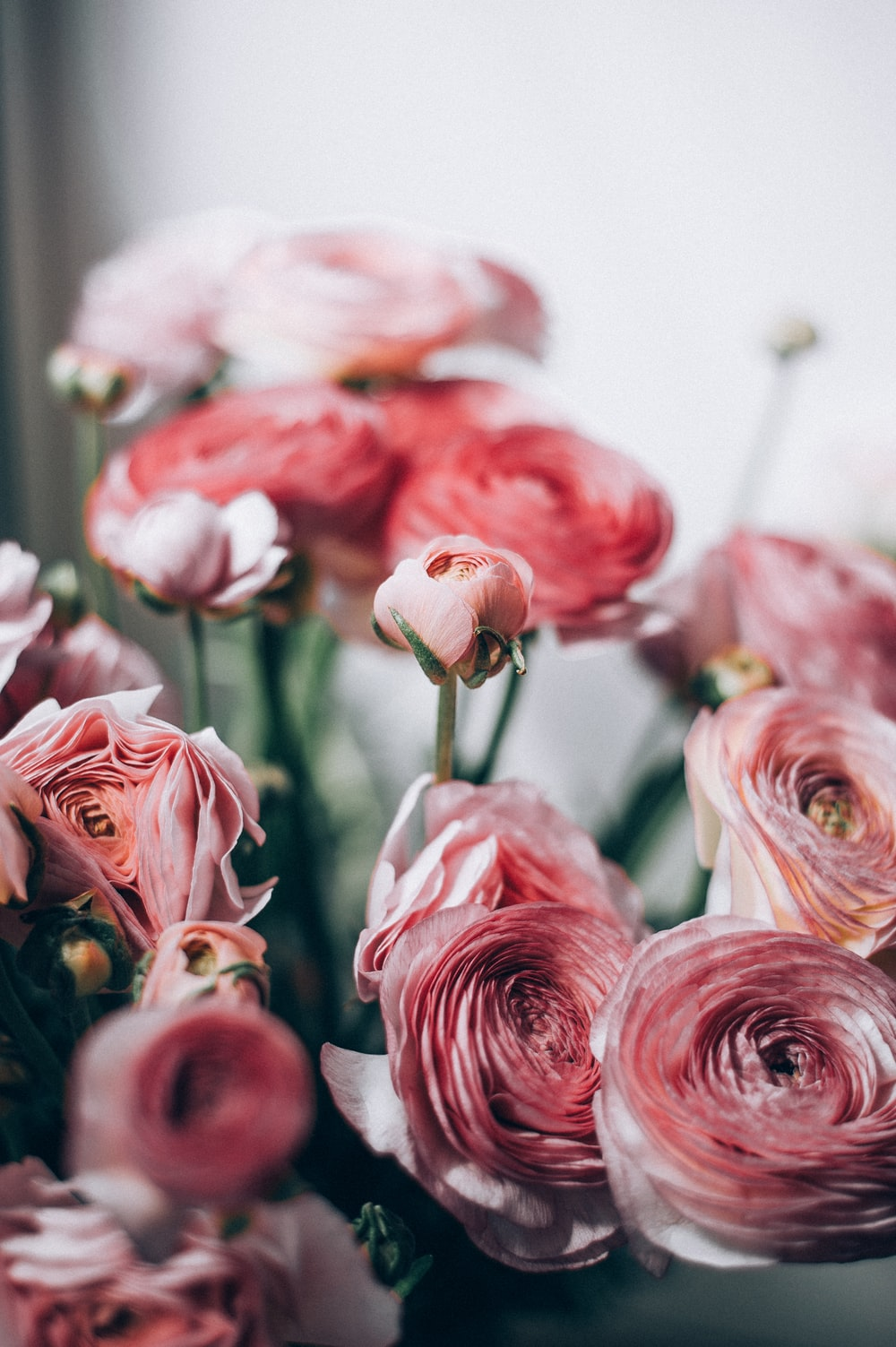 pink and white roses in close up photography