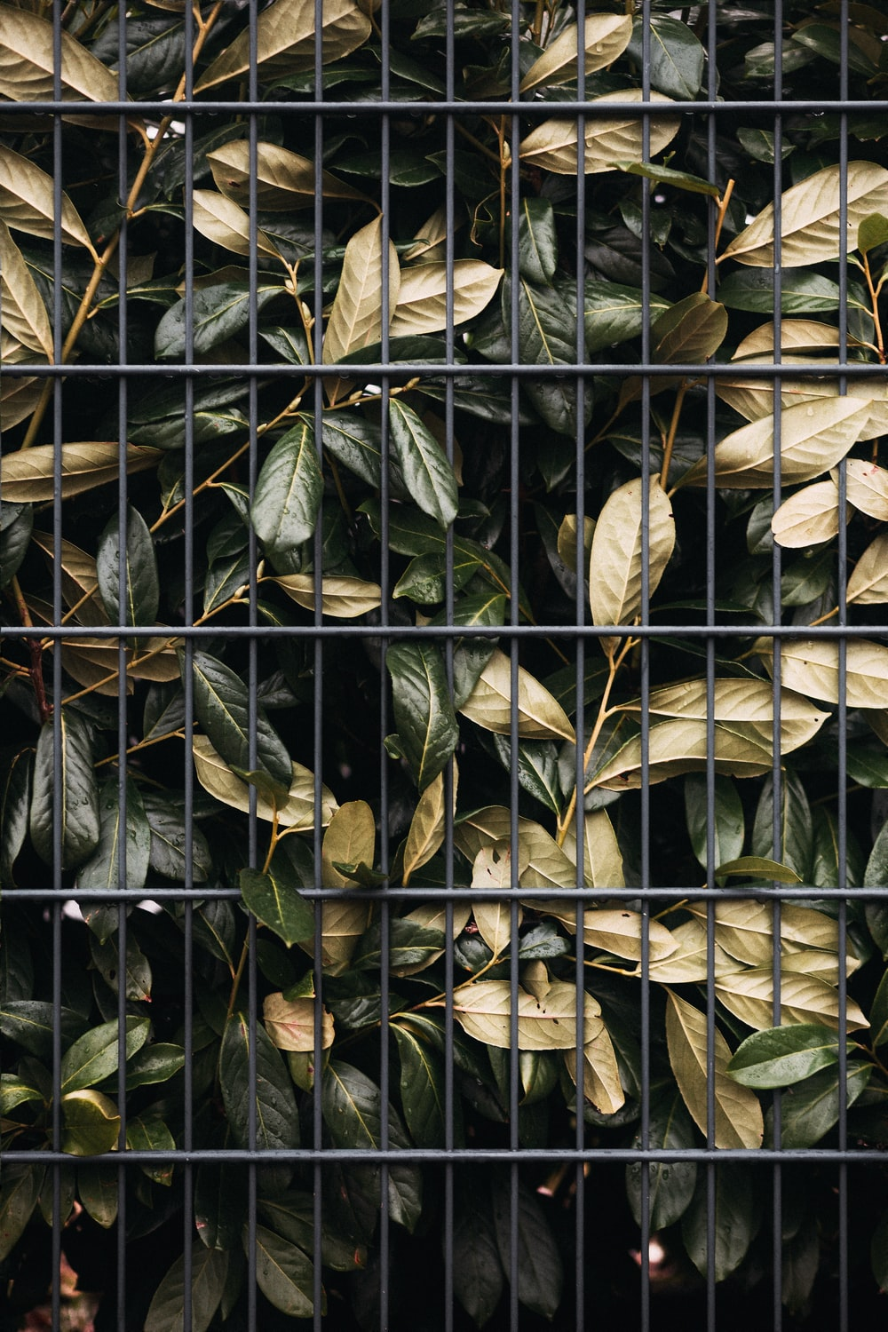 brown and green leaves on black metal fence